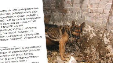 Ludzie chcą oddawać psy panu Krzysztofowi