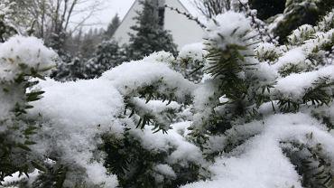 Śnieg w Szczyrku. Zdjęcie ilustracyjne