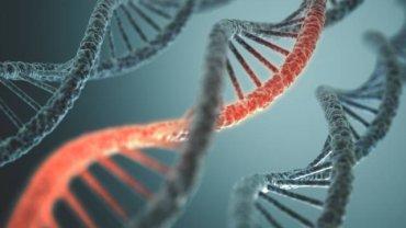Za rozwój choroby odpowiada przede wszystkim wada genetyczna
