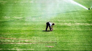 Remont murawy na stadionie Ruchu Chorzów dobiega końca