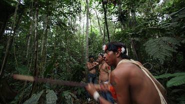 Puszcza Amazońska. Zdjęcie ilustracyjne