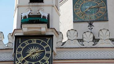 Koziołki na ratuszu w Poznaniu