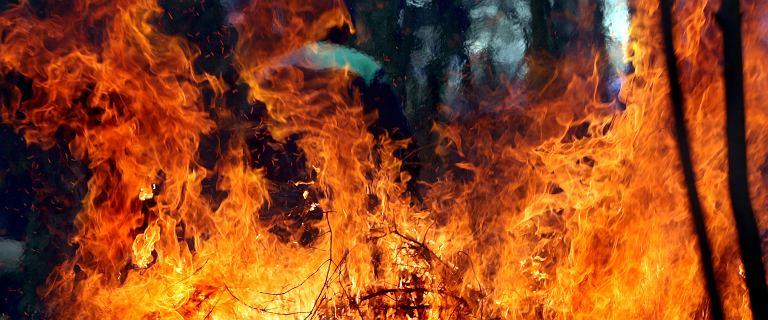 Seria pożarów lasów na Mazowszu. Zapłonęła m.in. Puszcza Kampinoska