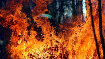 Seria pożarów lasów na Mazowszu / Zdjęcie ilustracyjne