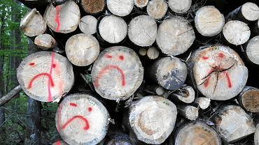 Komitet UNESCO: Puszcza Białowieska musi być w pełni chroniona, a nie wycinana