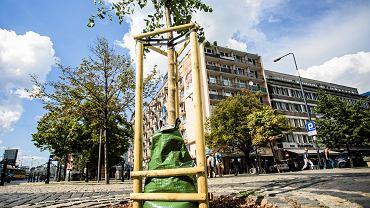 Zarząd Zieleni zakupił 280 specjalnych worków na drzewa