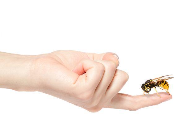 Użądlenie pszczoły: jak postępować, gdy użądli cię pszczoła?
