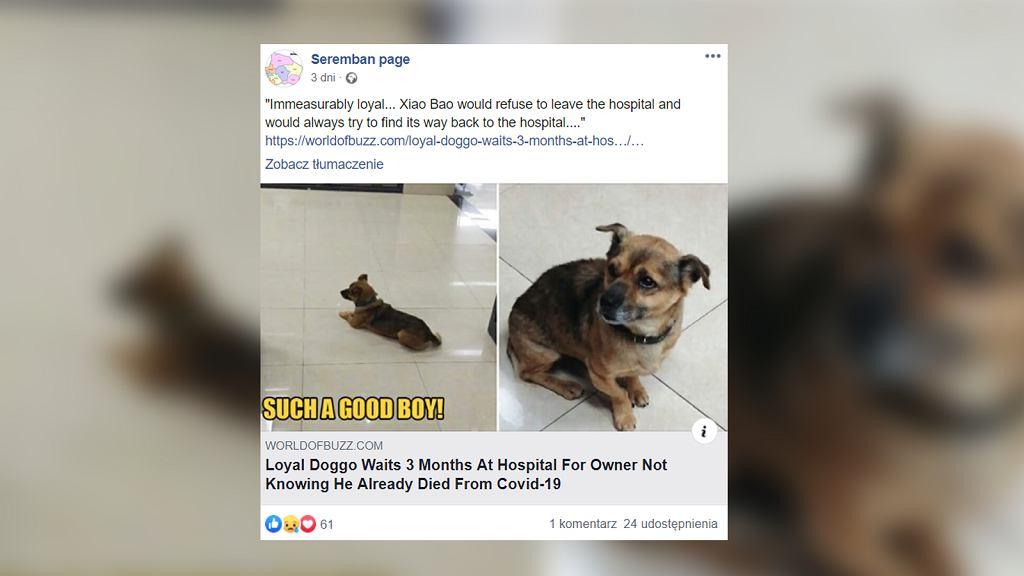 Pies czuwał w szpitalu przez trzy miesiące. Czekał na właściciela, który zmarł z powodu koronawirusa