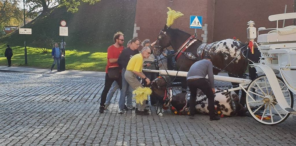 Koń upadł pod Wawelem