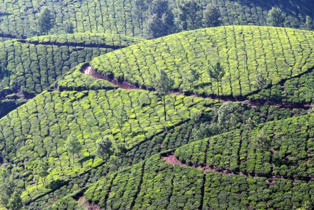 Ghat, Kerala/ Fot. Shutterstock