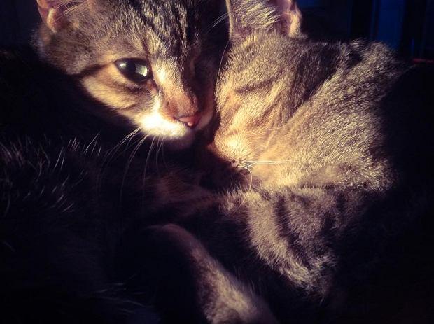 Zdjęcie numer 2 w galerii - Karmel, Daktyl, Kapitan Benny, Ptyś, Wiesław... Kochane i piękne - oto Wasze koty [GALERIA NA DZIEŃ KOTA]