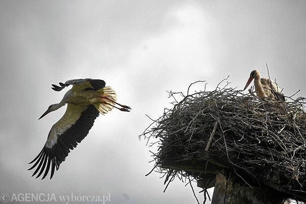 Ptaki Przelatują Aktualne Wydarzenia Z Kraju I Zagranicy