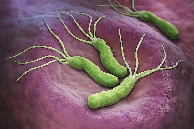 Bakteria Helicobacter pylori z charakterystycznymi rzęskami