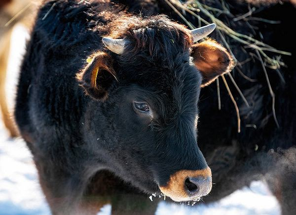 Wańczykówka, na 40 hektarach Wańczykowie wypasają krowy iuprawiają dla nich zboże. Oprócz rodziny pracują u nich jeszcze cztery osoby