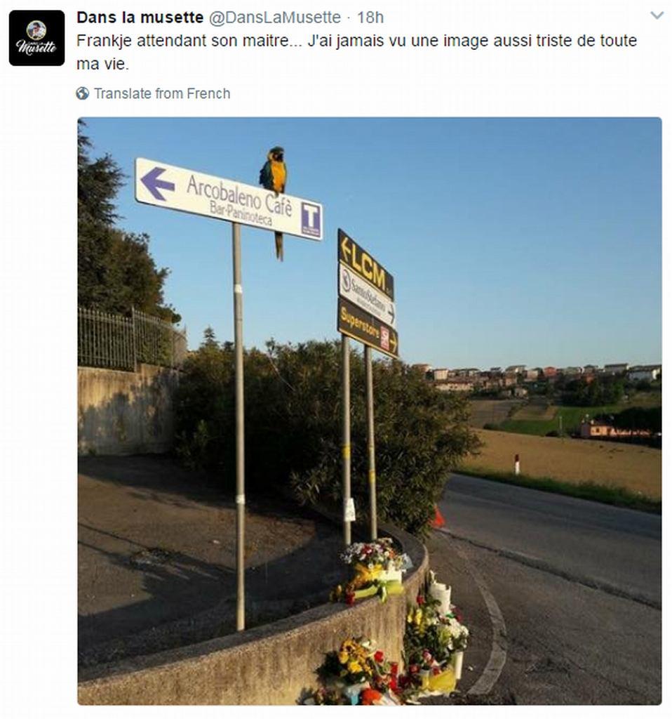 Papuga Frankie na miejscu wypadku Scarponiego