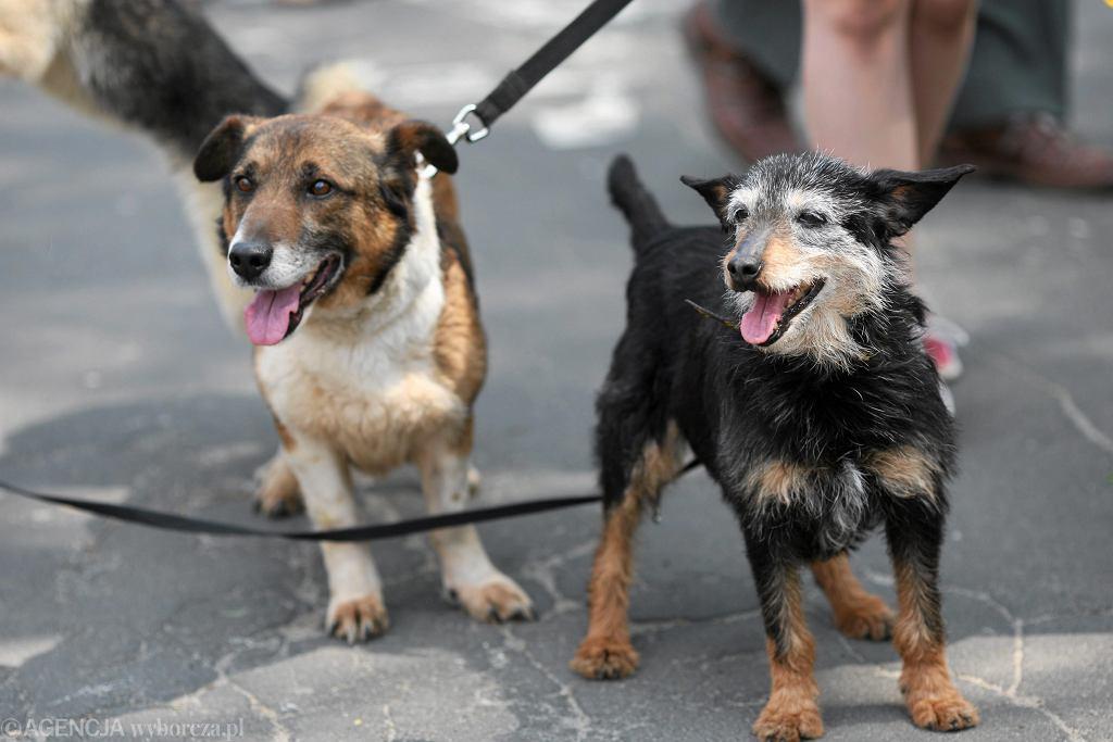 Psy na spacerze (zdjęcie ilustracyjne)