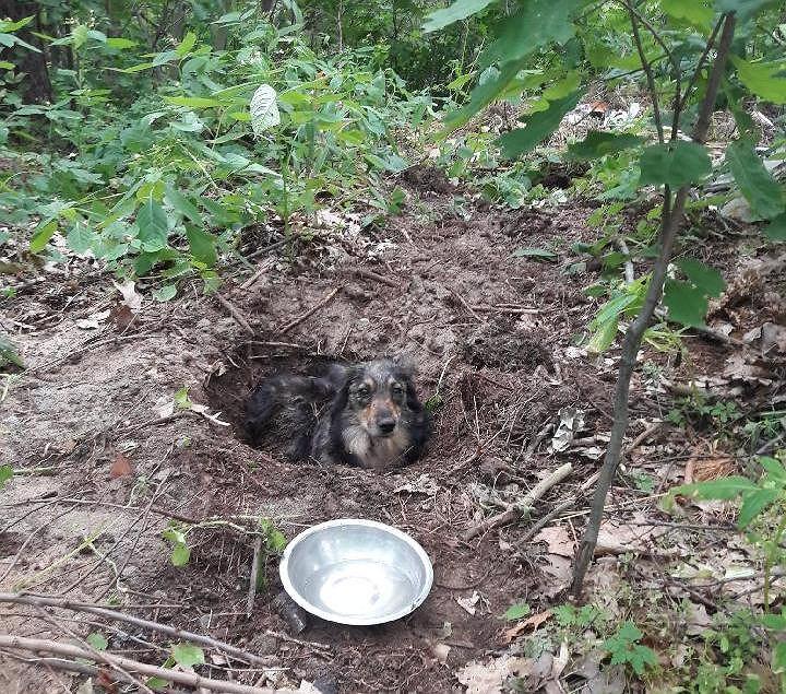 Pies był zakopany 50 cm pod ziemią