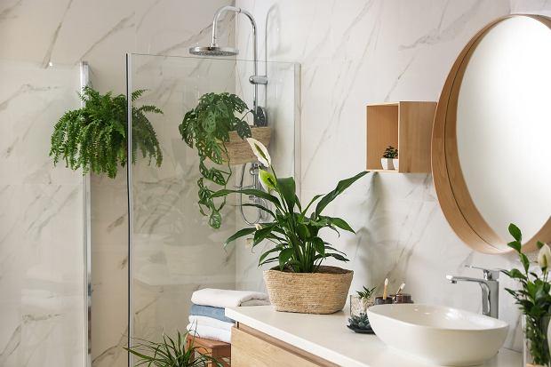 Kabina prysznicowa do małej łazienki - top 5