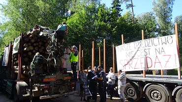 Puszcza Białowieska. Blokada samochodów wywożących wycięte drzewa. Środa 16 sierpnia 2017 roku