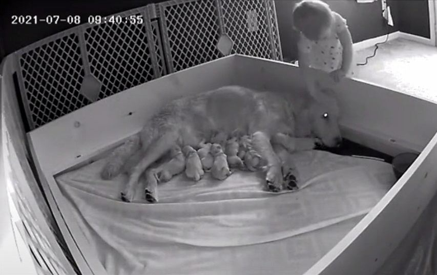 Dziecko wymknęło się w nocy do suczki karmiącej szczenięta. Kamera uchwyciła jego gest