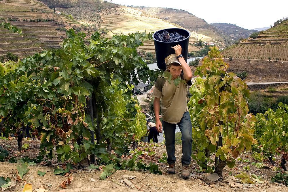 Porto wino - winnice w regionie Douro / Shutterstock