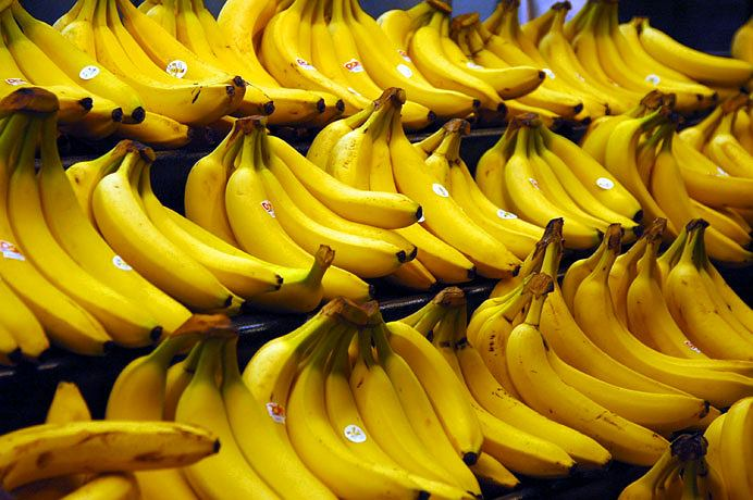 Banany są w niebezpieczeństwie. Bananowce atakuje bowiem groźny gatunek grzyba. Czy będziemy musieli się obejść bez słodkich, żółtych owoców?