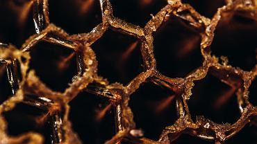 Mleczko pszczele - złoty środek dla zdrowia i pięknej urody