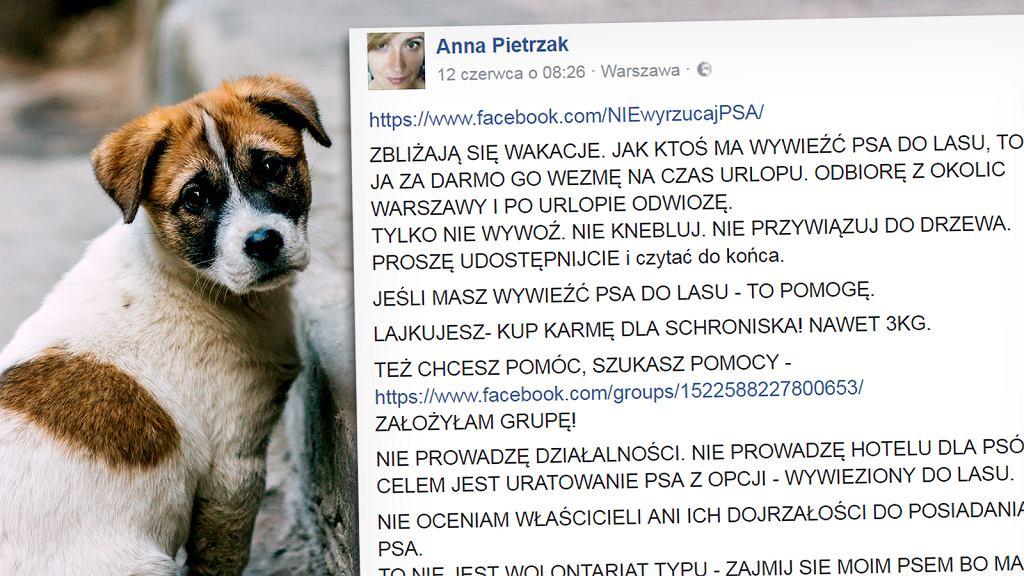 'Jak ktoś ma wywieźć psa do lasu, wezmę go za darmo na czas urlopu'. Ludzie poruszeni postem na FB