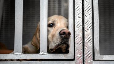Przerażone wybuchami petard psy przed Sylwestrem często uciekają właścicielom