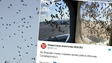 Pszczoły w samolocie