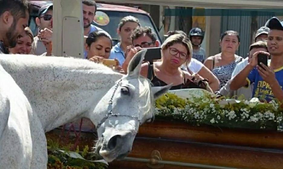 Koń Sereno wzruszył innych uczestników pogrzebu