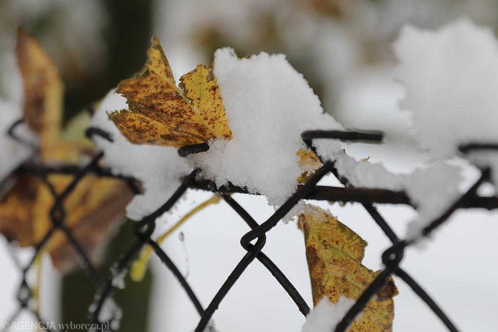 Pogoda długoterminowa na grudzień (zdj. ilustracyjne)
