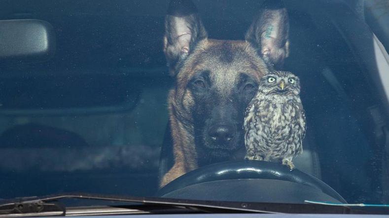 Pies, który przyjaźni się z... sową. Fotografka uwiecznia wyjątkowe relacje zwierzaków (zdjęcie ilustracyjne)