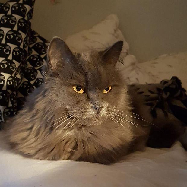 Zdjęcie numer 13 w galerii - Karmel, Daktyl, Kapitan Benny, Ptyś, Wiesław... Kochane i piękne - oto Wasze koty [GALERIA NA DZIEŃ KOTA]