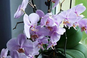 Kwiaty doniczkowe idealne do domu