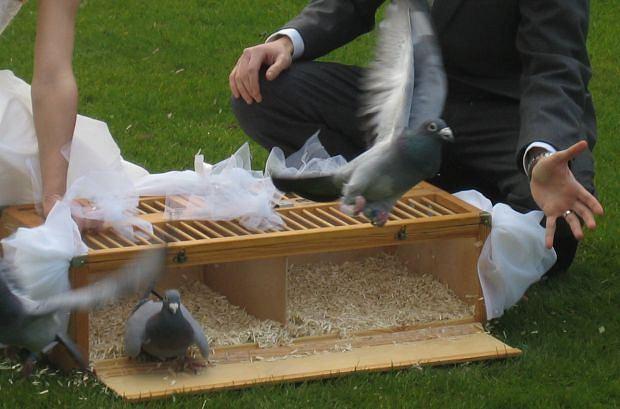 Ślubne gołębie