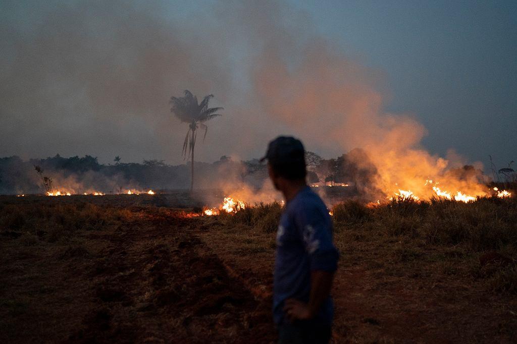Brazylia. Płoną lasy Amazonii.