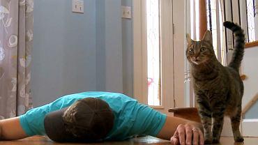 Sfingowana śmierć na oczach kota