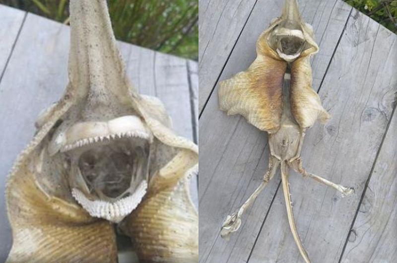 Znalazła na plaży dziwaczny szkielet. Ludzie zastanawiają się, czy to przybysz z kosmosu