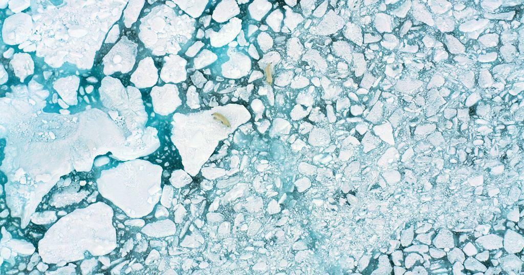 'Na ratunek Arktyce' National Geographic