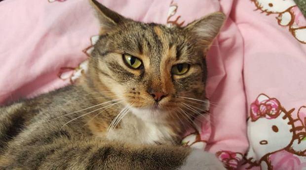 Zdjęcie numer 12 w galerii - Karmel, Daktyl, Kapitan Benny, Ptyś, Wiesław... Kochane i piękne - oto Wasze koty [GALERIA NA DZIEŃ KOTA]