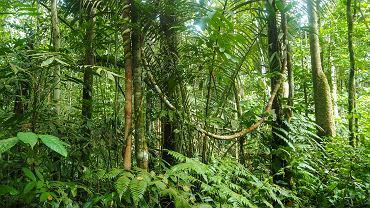 Matka z trójką dzieci zginęła w dżungli