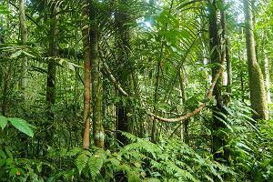 Mama zgubiła się w amazońskiej dżungli z trójką dzieci. Opowiedziała, jak przetrwali
