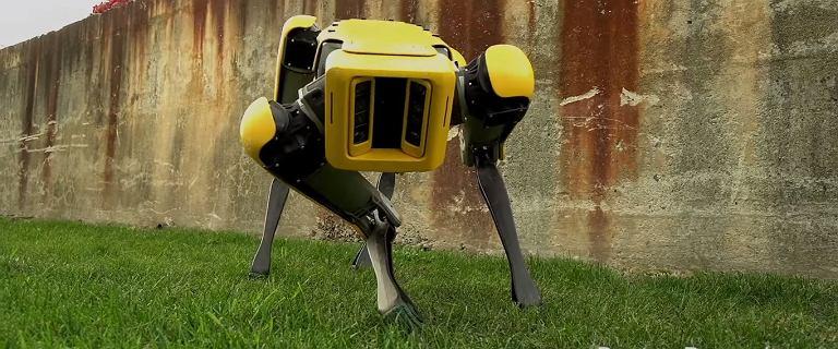 Boston Dynamics pokazuje komercyjną wersję robota SpotMini