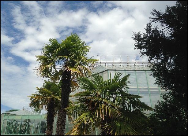 Czeska palma