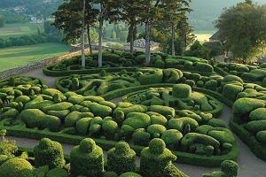 Fantastyczne miejsce: ogród Marqueyssac [FRANCJA]