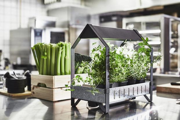 Zielona Kuchnia Budowa Projektowanie I Remont Domu