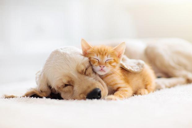 Gadżety dla miłośników zwierząt: top 18 do kuchni, salonu i garderoby