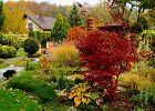 Jesienne porządki w ogrodzie, dmuchawa do liści