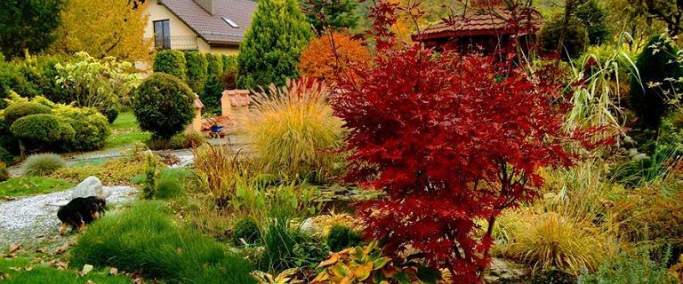 Dmuchawa do liści - sposób na sprzątanie ogrodu